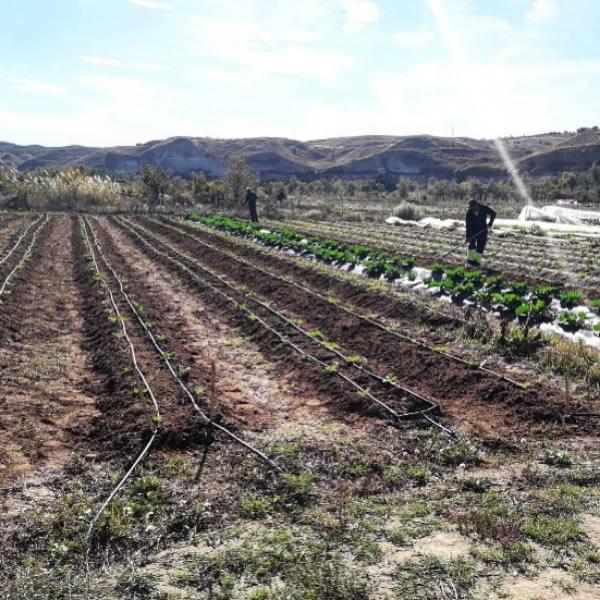 Huerta ecológica Riconatura en Madrid